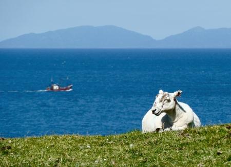 Sheep on the coast of the Isle of Skye Stock Photo