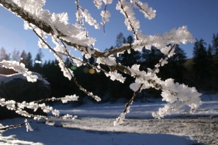 Ice flowers on branch