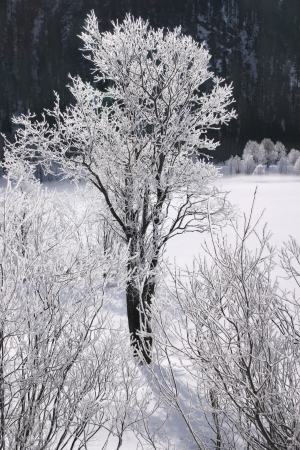 Tree on a beautiful winter Stock Photo
