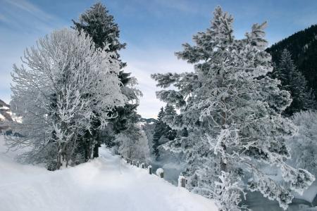 Snowy winter trail