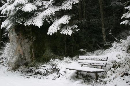 bench in winter dress
