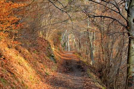 Romantic forest path Stock Photo - 18311070