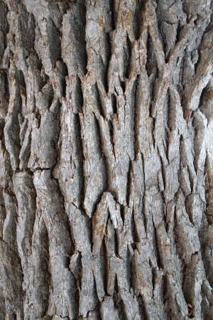 Bark of old trees