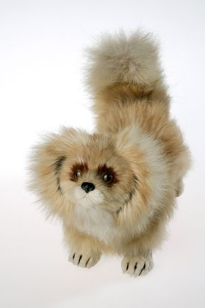 A lovely toy dog is on white background Stock Photo - 6237827