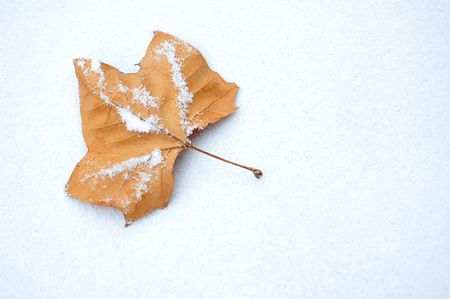Brown maple leaf lightly covered in snow Stock Photo - 6421676