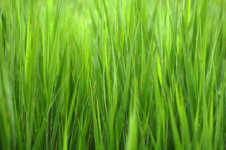 Lush spring bright and saturated green grass background