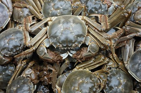 Put together a lot of crabs