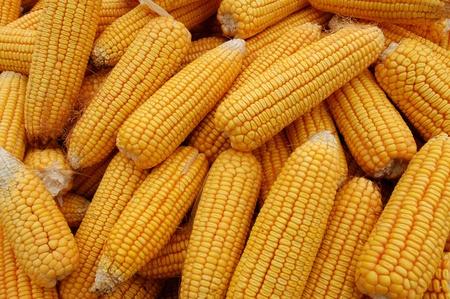 stacks of corn