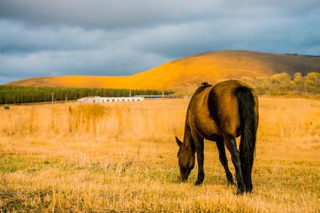 Horses grazing in autumn prairie