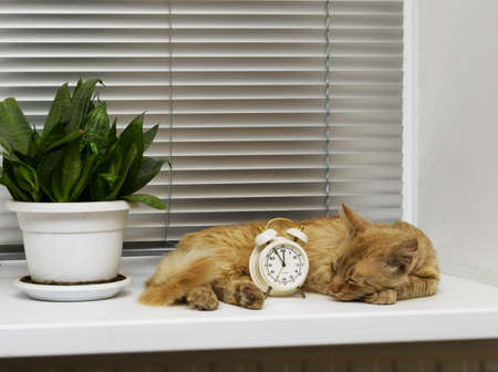 quietness, ginger cat sleeps on the windowsill next to the alarm photo