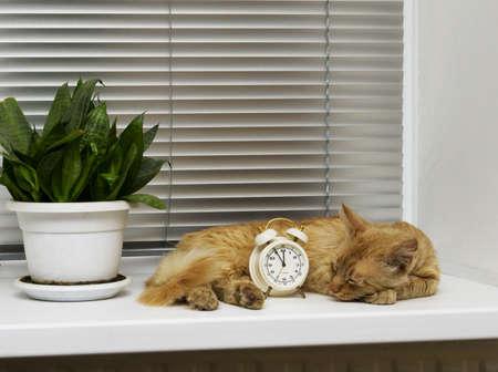 quietness: quietness, ginger cat sleeps on the windowsill next to the alarm