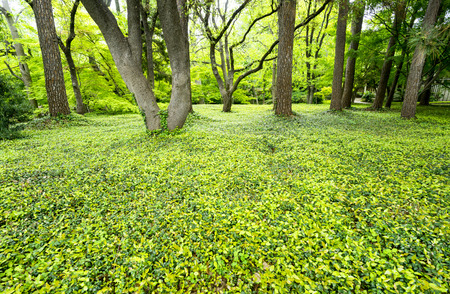 So Green - Fort Worth Botanic Garden, TX Stock Photo, Picture And ...