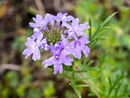 Wildflower: Unknown Wildflower Stock Photo