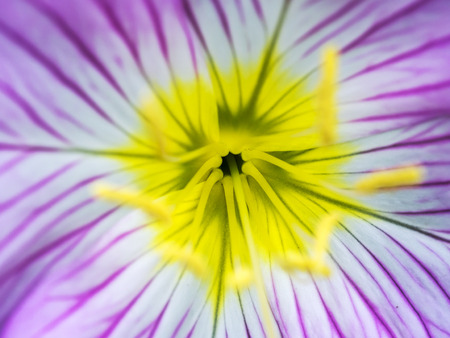 Colorful - closeup to a flower