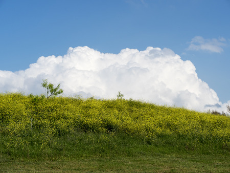 agri: Canola Hill - clouds are rising over canola hill