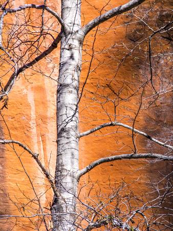canyon walls: Arizona Canyon Walls Stock Photo
