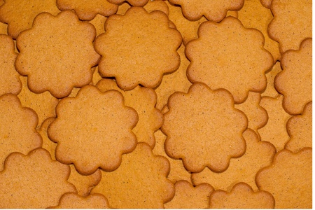 A background of round gingerbread biscuits, rather close-up. photo
