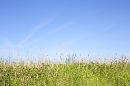 Grasses Under Blue Summer Sky, an empty stretch of natural uncultivated grasses under a blue sky.