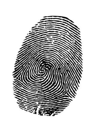 identidad: Vector de la huella dactilar en el fondo blanco