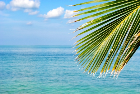 Palms looking out over a turquoise ocean photo