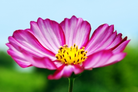 Pink Flower with Sky and Grass in Background photo