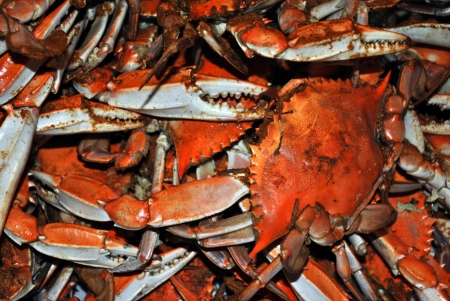 Bushels and Bushels of Hard shelled crabs Stock Photo