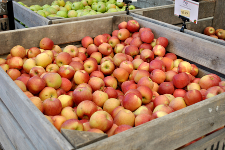 Fresh organic apples in crates at the farmers market.