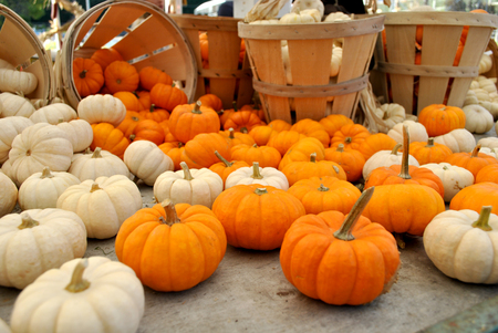 Mini Pumpkins in baskets at the farmers market