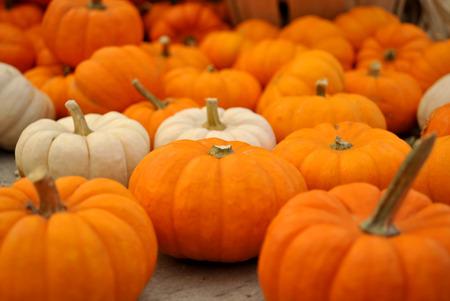 Mini Pumpkins Stock Photo