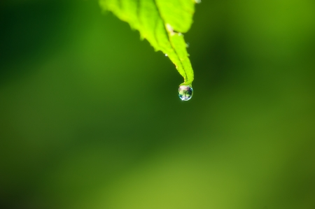 close up of water dropping from green leaf