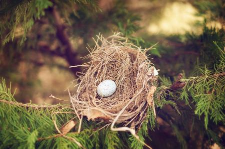 bird egg in a nest on a branch spring Reklamní fotografie