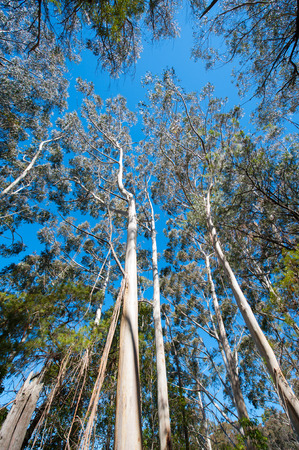 tall trees with blue sky above Reklamní fotografie