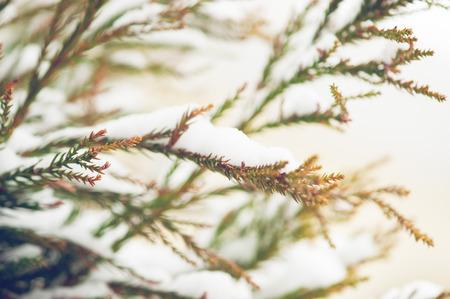 Snow covered tree branch in winter Reklamní fotografie