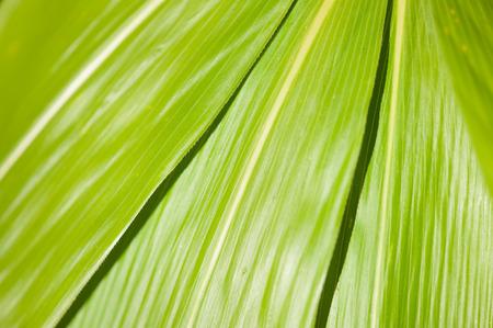 close up of sunlit leaves Reklamní fotografie