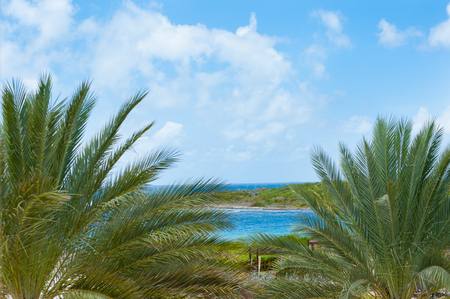 beach skyline with palm trees and blue sky with white clouds Reklamní fotografie