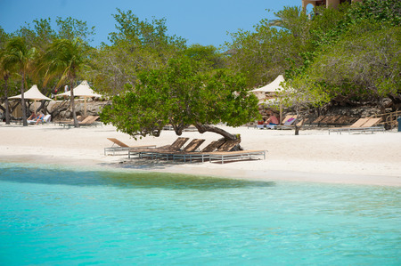 beach chairs in the sand under a shade tree with blue water Reklamní fotografie