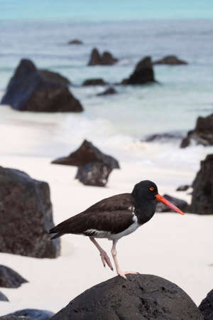 Birds in the Galapagos Islands, Ecuador