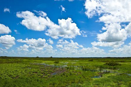 wetlands: Environmental Wetlands