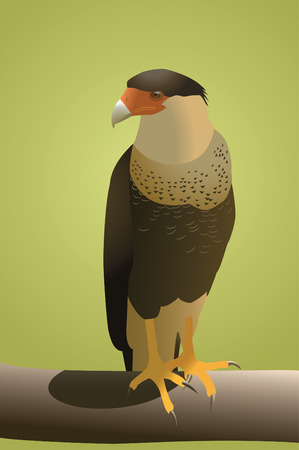 threatened: Crested Caracara on a Log. Vector. Illustration