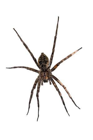 白い背景の上のクモ