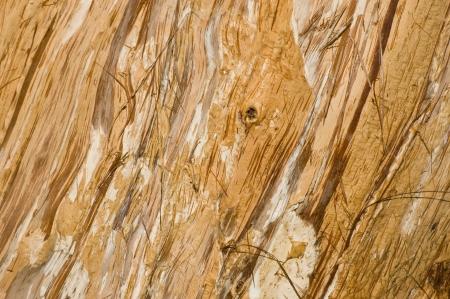 抽象的な背景がメラレウカの樹皮 写真素材