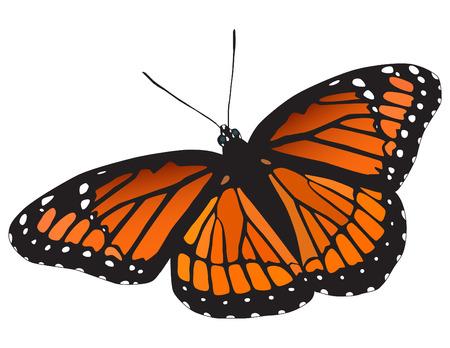 白い背景の上 viceroy の蝶。ベクトル。  イラスト・ベクター素材