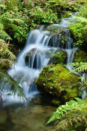 森林の滝 写真素材