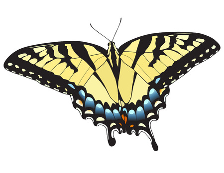 swallowtail: Eastern Tiger Swallowtail Butterfly. Vector. Illustration