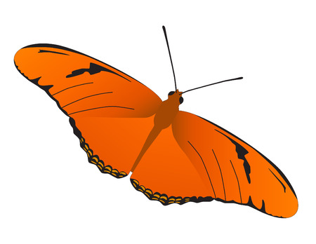 A vector illustration of Julia Butterfly.