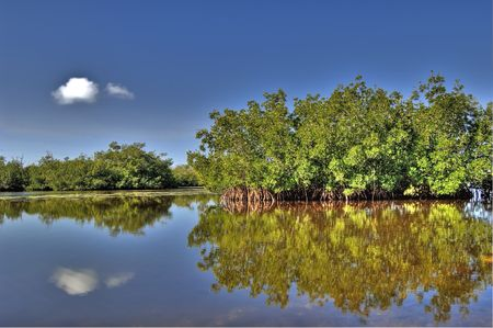 Estuary and Mangroves Stock Photo