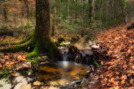 Deep Forest Creek Stock Photo