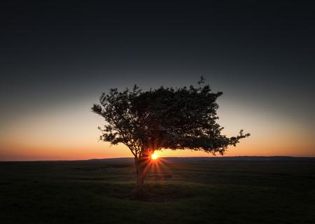 estuary: Sun setting on a solo tree on the Loughor estuary Penclawdd Swansea.