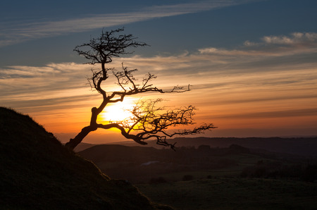 stark: A stark bare silhouetted tree on the Black Mountain in South Wales Stock Photo