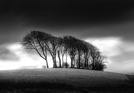 copse: The Copse at Garngoch Common, a highly visible landmark near Gorseinon in Swansea, South Wales Stock Photo